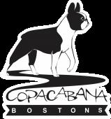 Boston Terrier - Canil Copacabana Bostons
